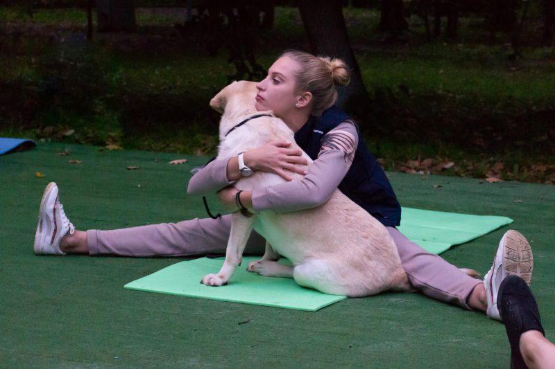 Доги и йоги