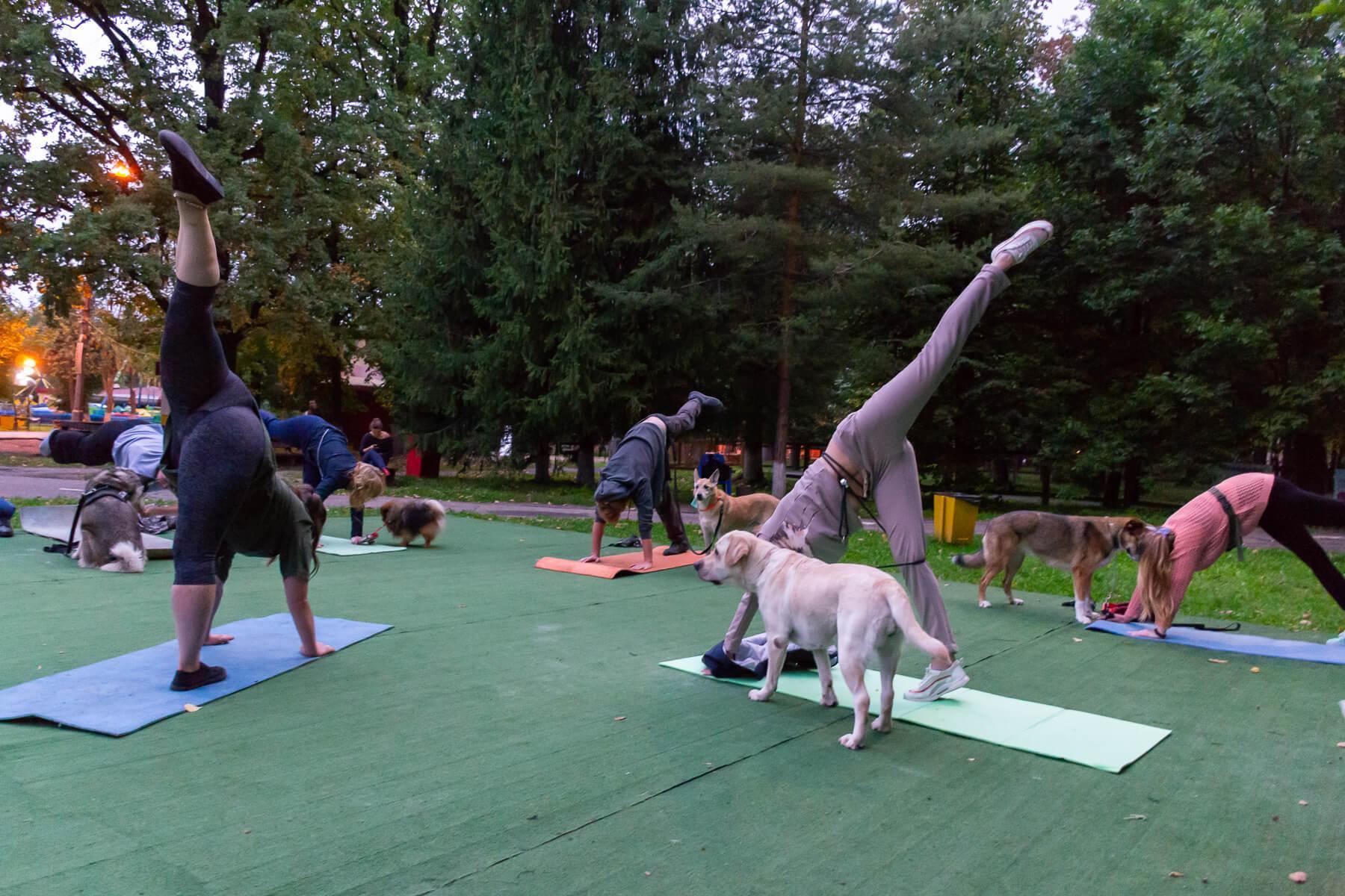 Дога йога