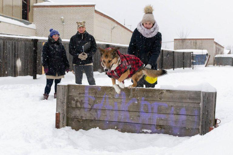 дрессировка собак электросталь экзамен